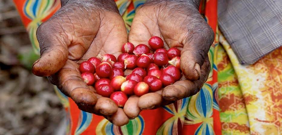Βραζιλια η μεγαλυτερη χωρα παραγωγης καφε και γενετειρα του Ipanema Espresso